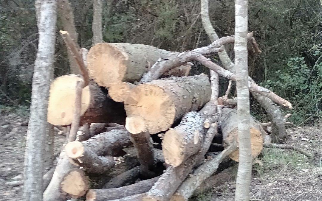 Comprender la madera