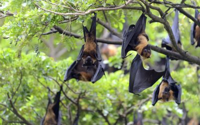 Murciélagos, un mal necesario